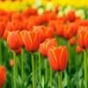 花粉症 早めの対策・治療法